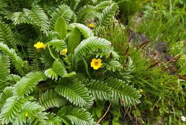 Annapurna Flowers -June 24, 2014-5
