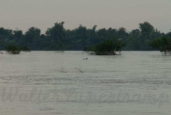 600 Dolphins September 24, 2014 - 10