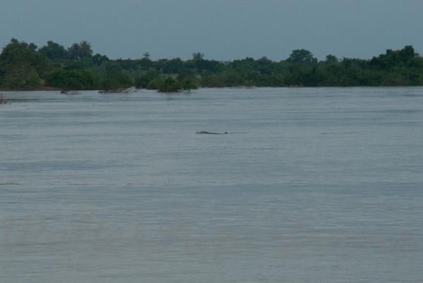 600 Dolphins September 24, 2014 - 15