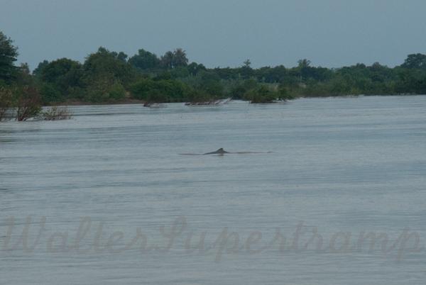 600 Dolphins September 24, 2014 - 18