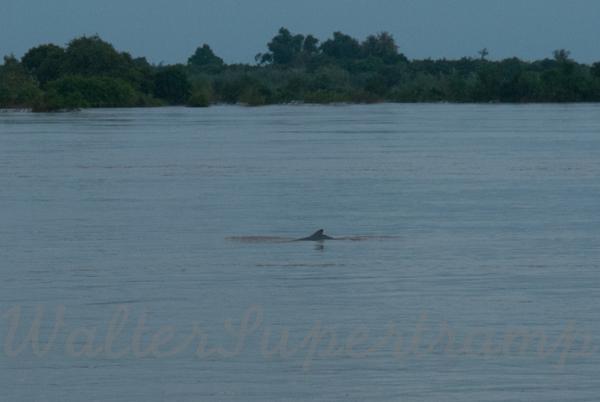 600 Dolphins September 24, 2014 - 26