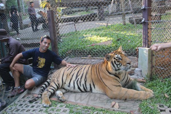 Tigers 600 November 25, 2014 - 21