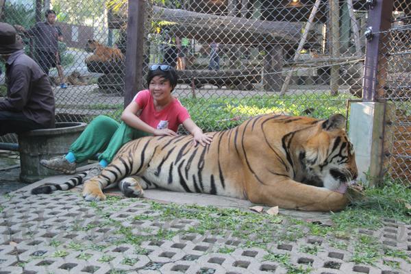 Tigers 600 November 25, 2014 - 22