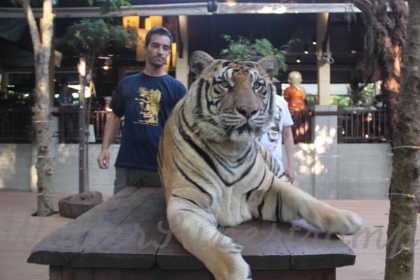 Tigers 600 November 25, 2014 - 26
