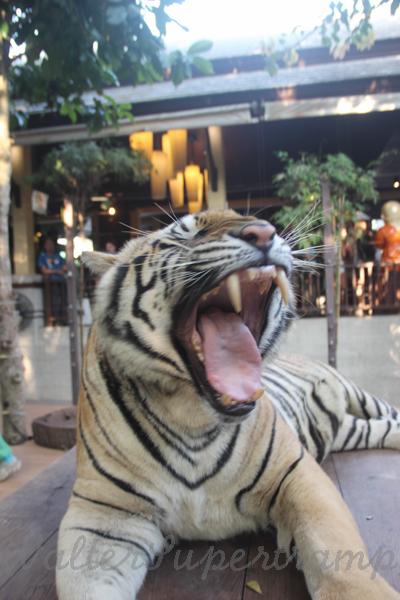 Tigers 600 November 25, 2014 - 27