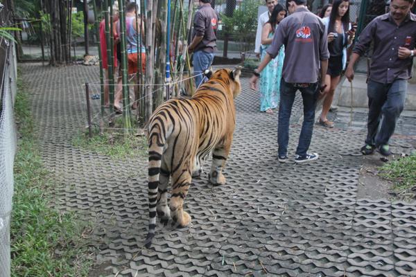 Tigers 600 November 25, 2014 - 28