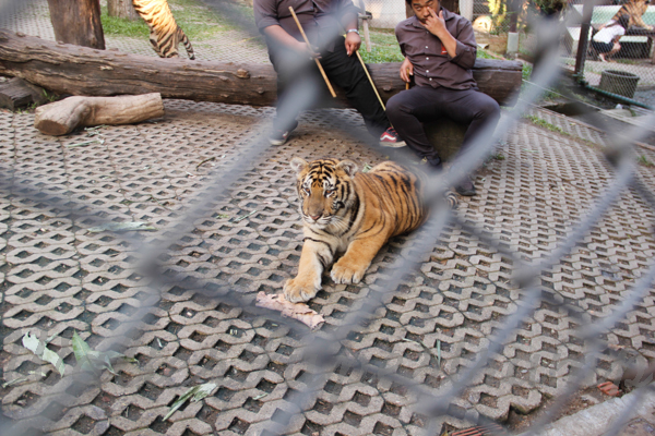 Tigers 600 November 25, 2014 - 32