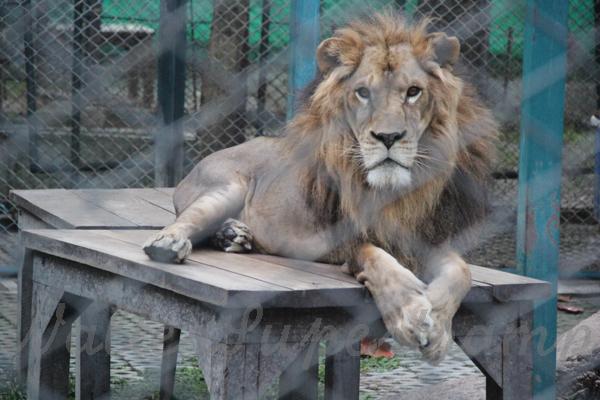 Tigers 600 November 25, 2014 - 38